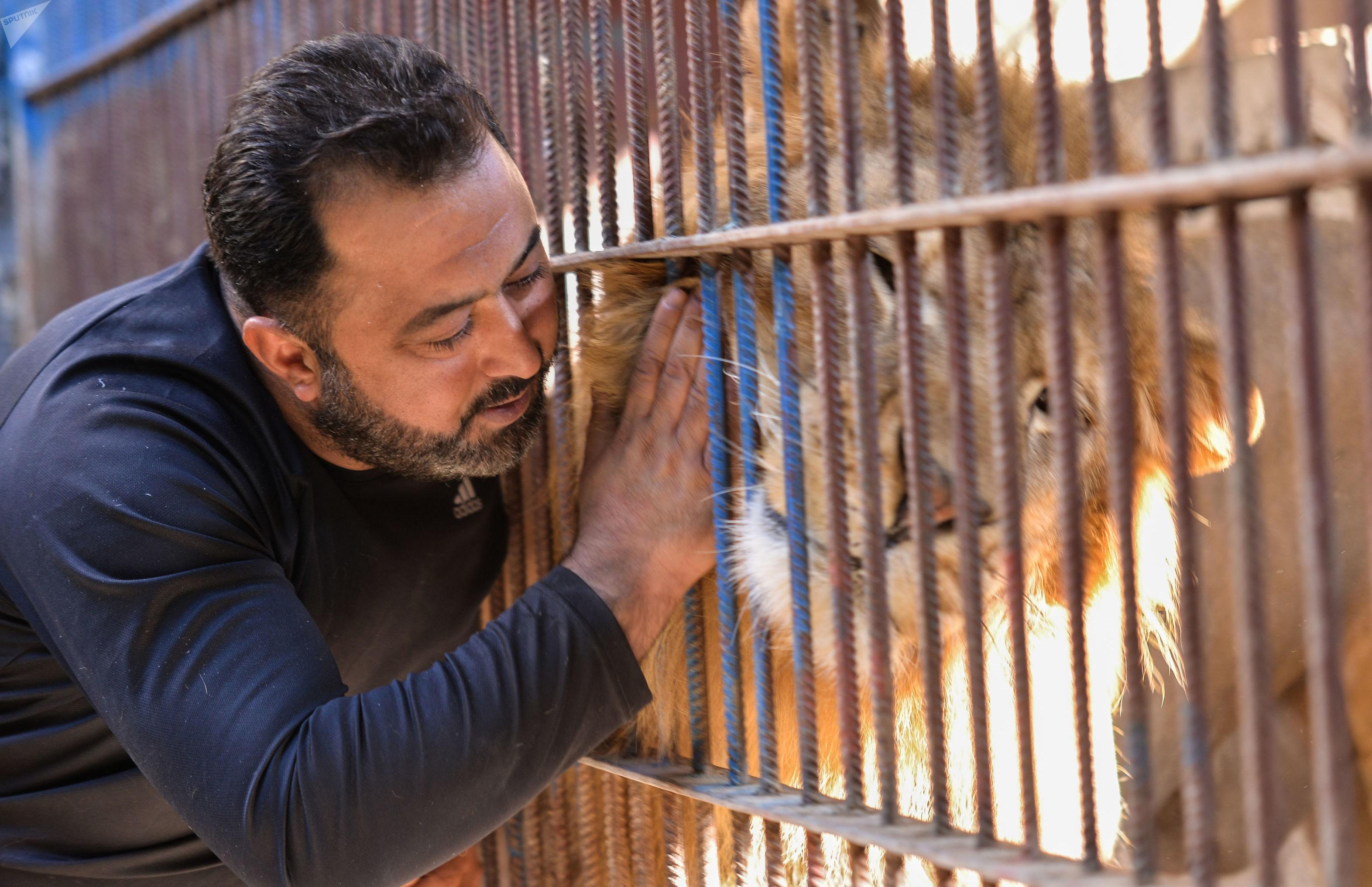 اسد شاب سوري حديقة حيوان.jpg