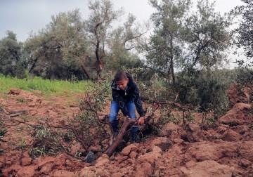 18 فبراير 2018 - الخراب الذي خلّفه القصف الصهيوني لأراضٍ زراعية في غزة