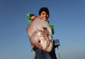 الصياديين يعودون بأسماك ال9 ميل .