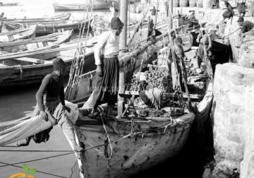 صورة تاريخية لمدينة يافا قبل الاحتلال الصهيوني