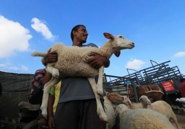 موسم عيد الأضحى في غزة.. العام الأسوأ.!