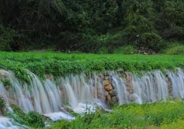 فلسطين الخضراء