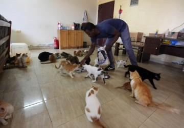 فلسطيني يربي القطط الضالة بمنزله في غزة