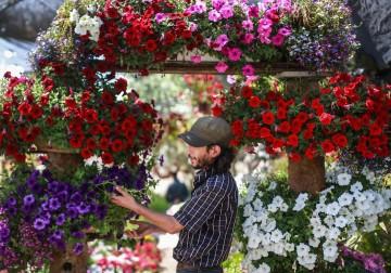 مزارع يتفحص الزهور في أحد المشاتل وسط قطاع غزة