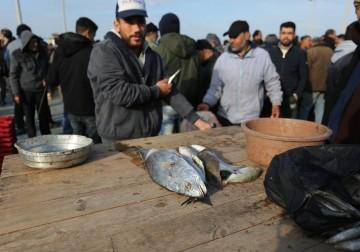 صيادون فلسطينيون يجمعون الاسماك في ميناء مدينة غزة