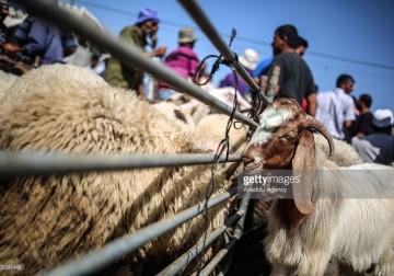 استعدادات عيد الأضحى في غزة