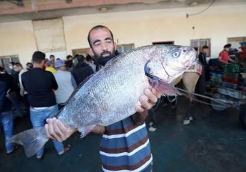 صيد بحر غزة صباح الاثنين - 14 حزيران