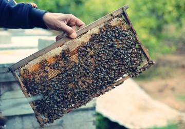 موسم العسل يُعانق الرّبيع
