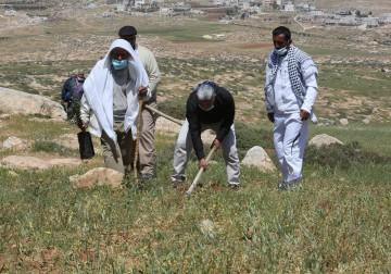 أهالي عين البيضا جنوب الخليل يقومون بزراعة اشجار الزيتون في الأراضي التي صادرها الاحتلال