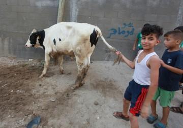 مواطنون يذبحون الأضاحي خلال اليوم الأول من عيد الأضحى بغزة