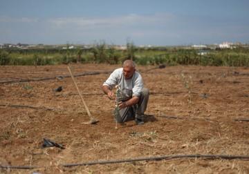 فعاليات يوم الارض شرق مدينة غزة اتحاد لجان العمل الزراعي.. تصوير/ رامز حبوب