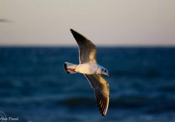 طير النورس علي شواطئ بحر غزة