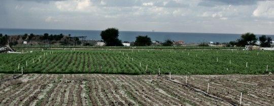 الأراضي الزراعية الفلسطينية