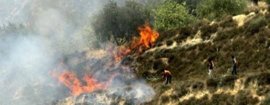 حرق اشجار في نابلس من قبل قطعان المستوطنين