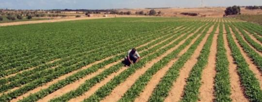تصدير منتجات القطاع الزّراعية لدولة الاحتلال