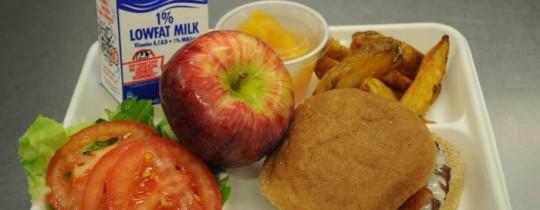 صندوق طعام للمدرسة - تعبيرية