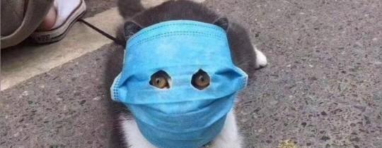 15% من القطط التي أجريت لها فحوص مُصابة بالمرض