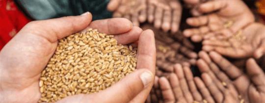 هل يتسبب فيروس كورونا بأزمة غذائية عالمية؟
