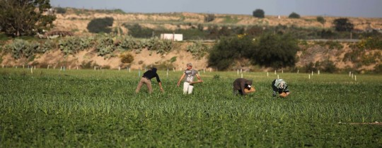 مزارعون يعملون بأرضهم - ارشيف