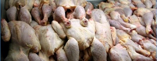 تعبيرية-دجاج فاسد