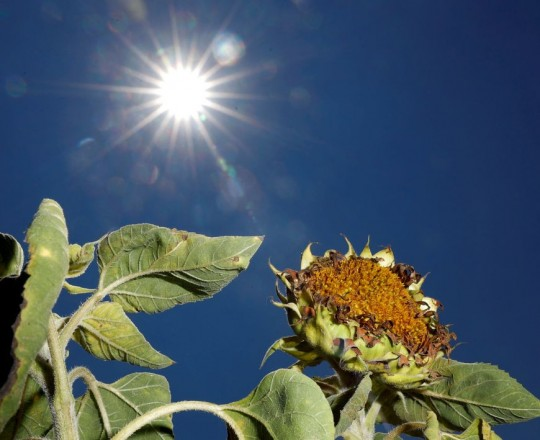 الزيادة التدريجية في متوسط درجة حرارة الأرض ستؤدي إلى عمليات أخرى لا يمكن وقفها