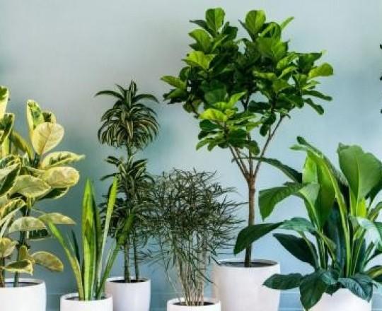 نباتات زينة- صورة تعبيرية