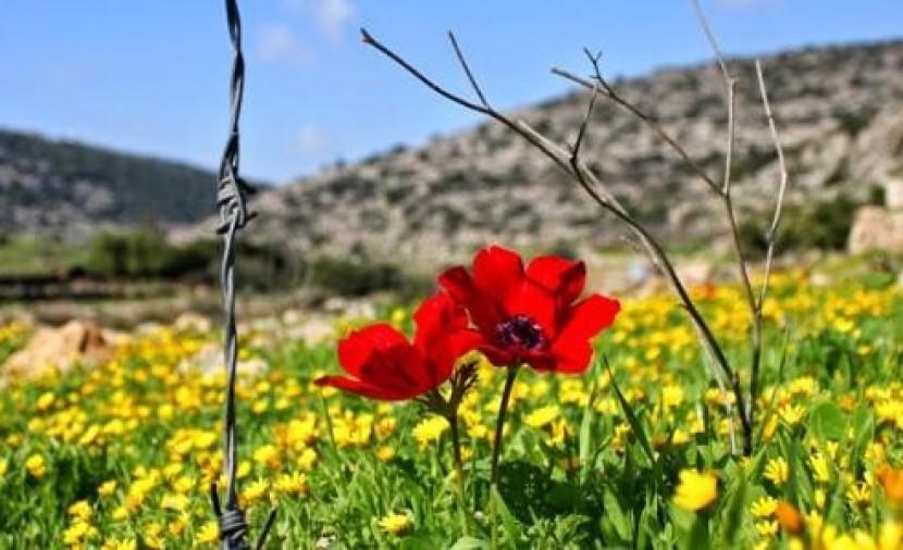 طقس فلسطين اليوم وغدًا: ارتفاع على درجات الحرارة